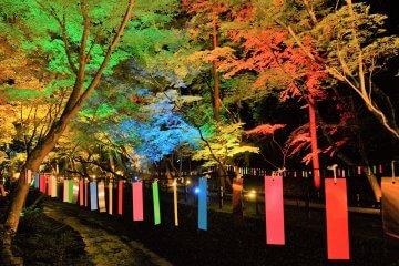 「京の七夕」全エリアをチェック