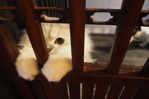 町家猫喫茶[うたねこ堂]で、にゃんこと触れ合ってみた!