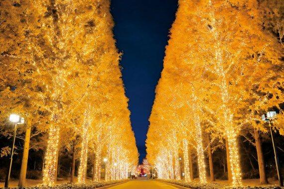 ローム イルミネーション2019(11/22〜12/25)@ローム本社
