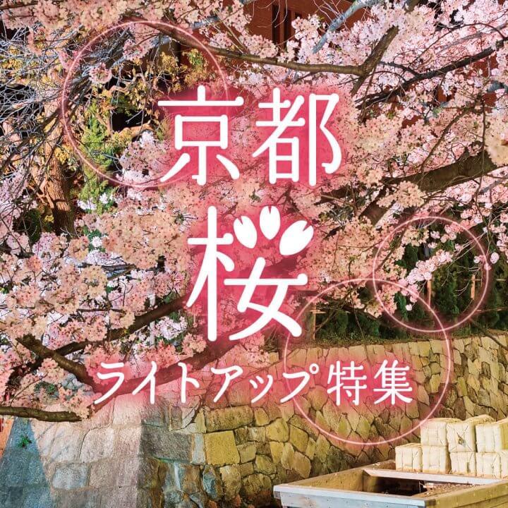 京都・桜ライトアップ