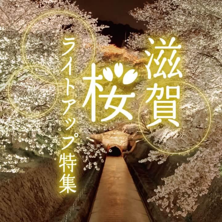 滋賀・桜ライトアップ