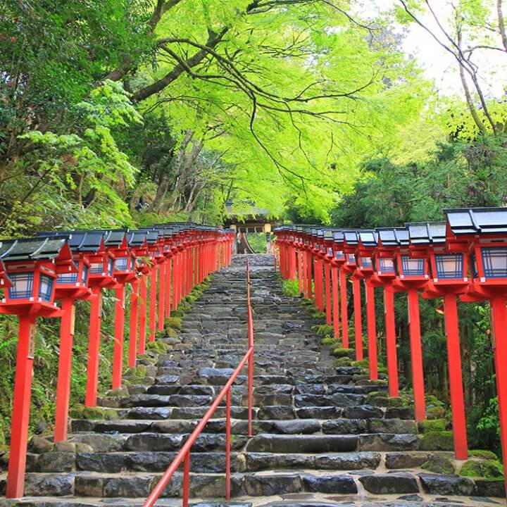 京都の青もみじスポット