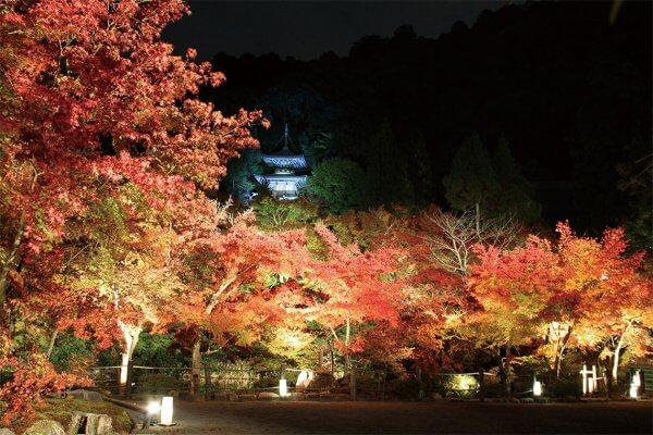 まだ間に合う!京都・紅葉ライトアップ5選